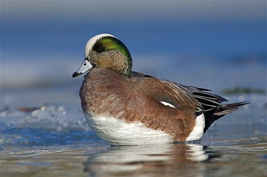 ducks unlimited essay Free essays on ducks unlimited for students use our papers to help you with yours 1 - 30.